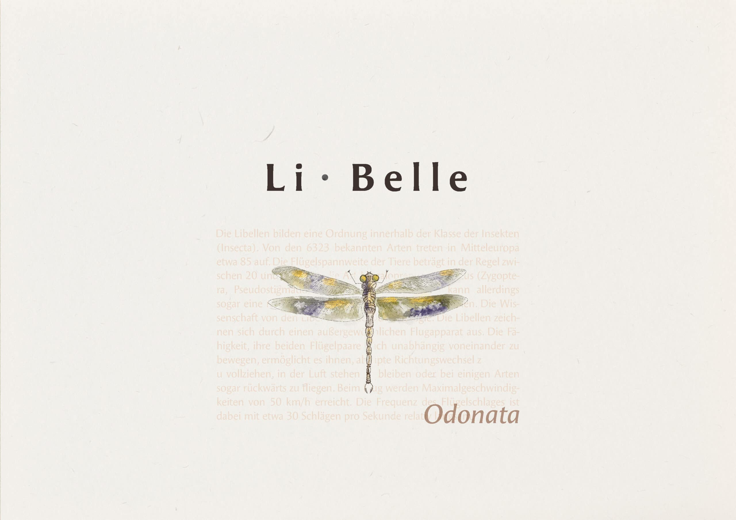 Li-Belle Brand Konzept